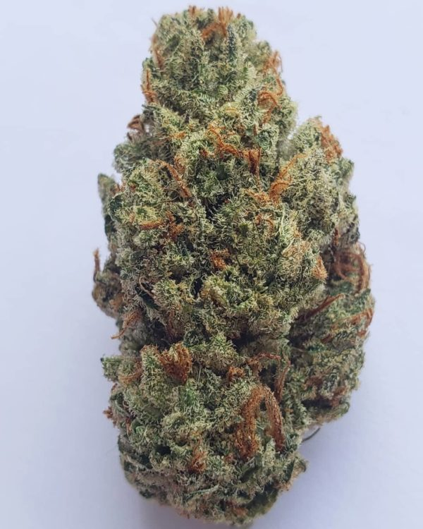 Buy amnesia haze leafly | #1 Quality amnesia haze strain(amnesia haze seeds)