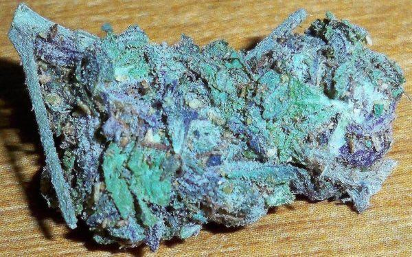 Buy blue dream seeds | #1 quality blue dream strain